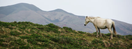 Sad Horse. A seemingly sad or lonely horse a-top a hill overlooking the mountains stock photography