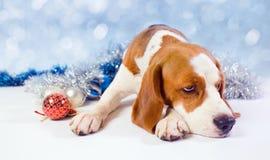 Sad  hound Royalty Free Stock Photo