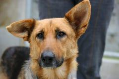 SAD hund Arkivfoton