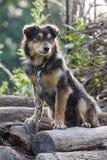 SAD hund Royaltyfri Foto