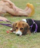 SAD hund Arkivfoto
