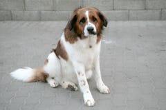 SAD hund Arkivbild