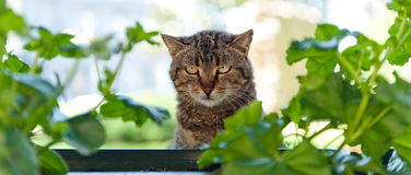 Sad hungry cat portrait. Surrounded by green leaves. Shallow DOF Stock Photography