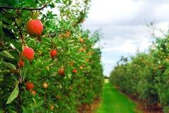 sad jabłkowy obrazy royalty free
