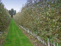 sad jabłkowy obrazy stock