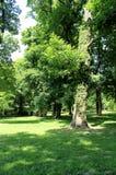 Sad Janka Kráľa. (Oldest Bratislava park) Stock Image