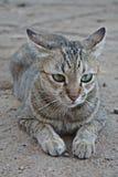 SAD katt Fotografering för Bildbyråer