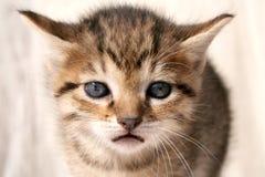 SAD kattunge Royaltyfri Foto