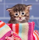 Sad kitten. Sad cute kitten in a warm knitted scarf over light blue background Stock Photo