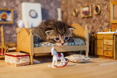 Sad kitten in a dolls house bedroom Royalty Free Stock Photos