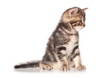 Sad kitten Royalty Free Stock Image