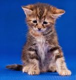 Sad kitten Royalty Free Stock Photos