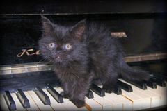 Sad kitten on the piano stock photography