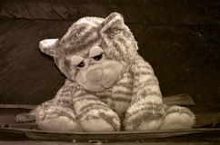 Sad kitten at sepia Royalty Free Stock Photography