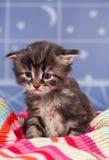 Sad kitten Royalty Free Stock Images