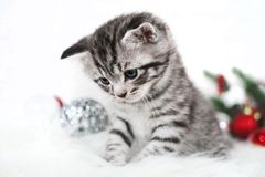 A sad kitten is striped Royalty Free Stock Photo