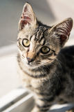 Sad Kitten. A tabby European Shorthair kitten with a sad expression, in front of a window Stock Image