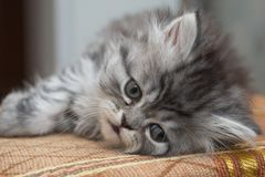 Sad kitty stock photo