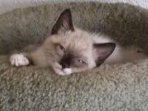 Sad kitty Royalty Free Stock Images