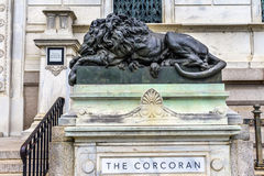 Sad Lion Closed Cochran Gallery of Art Washington DC Royalty Free Stock Image