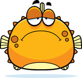 Sad Little Blowfish Royalty Free Stock Images