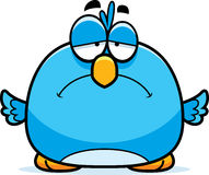 Sad Little Bluebird Royalty Free Stock Image