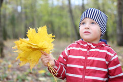 Sad little boy holds maple leaflets looks up. Stock Image