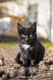 Sad little cat in autumn sunshine Stock Images