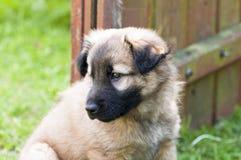 Sad little dog Stock Photos