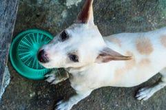 Sad little dog. Thai dog Stock Photo