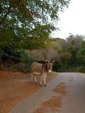 Sad little donkey stock image