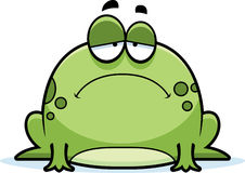 Sad Little Frog Stock Image