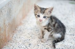 Sad little grey kitten sitting lonely on the stairs Royalty Free Stock Photos