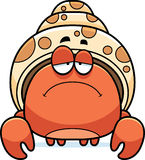 Sad Little Hermit Crab Royalty Free Stock Photo