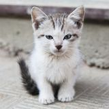 Sad little homeless kitten Royalty Free Stock Photos
