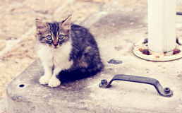 Sad little homeless kitten Royalty Free Stock Image