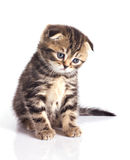 Sad little kitten Stock Images