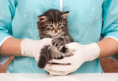Sad little kitten. On hands at the veterinarian Royalty Free Stock Photography