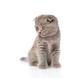 Sad little kitten looking away. isolated on white background Royalty Free Stock Photo