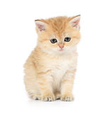 Sad little kitten on white background Stock Image