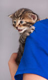 Sad little kitten Stock Photography