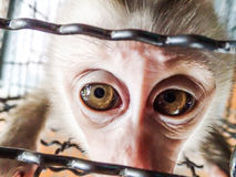 Sad little monkey in a cage Stock Image