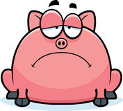 Sad Little Pig Stock Images
