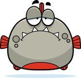 Sad Little Piranha Royalty Free Stock Images