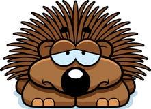 Sad Little Porcupine Stock Photo