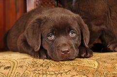 Sad Little Puppy Stock Photos
