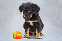 Sad little puppy and ball Royalty Free Stock Photos