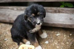Free Sad Little Puppy In A Wooden Box Is Asking To Be Adopted With Hope. Homeless Black And Tan Dog Royalty Free Stock Photo - 122088405
