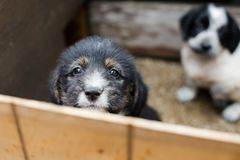 Sad Little puppy in a wooden box is asking to be adopted with hope. Homeless black and tan dog.  royalty free stock photo