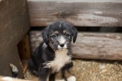 Sad Little puppy in a wooden box is asking to be adopted with hope. Homeless black and tan dog.  stock photos